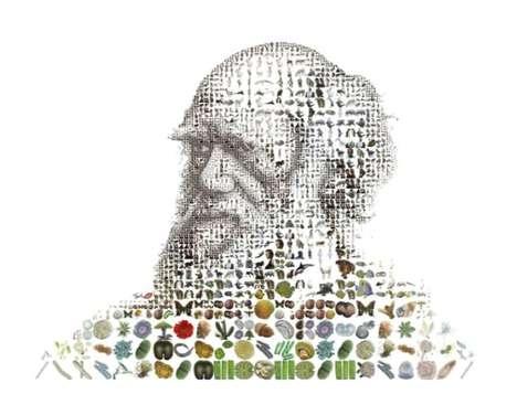 Experimental Evolutionary Mosaics