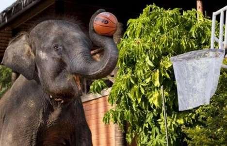 Elephant Ballers