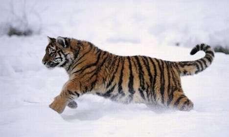 Endangered Pets