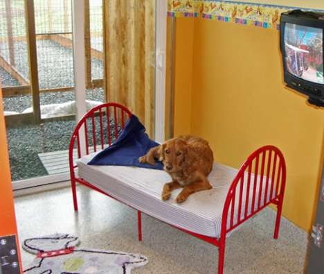 Fun Camps for Pets