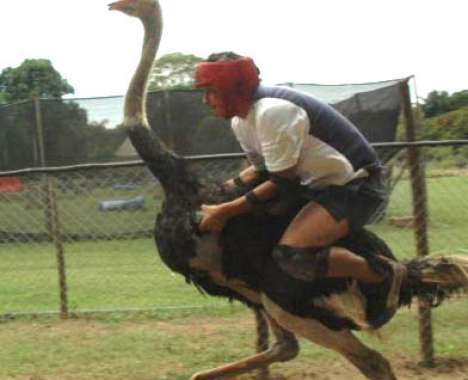 10 Ostentatious Ostriches