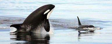Epic Sea Creature Battles