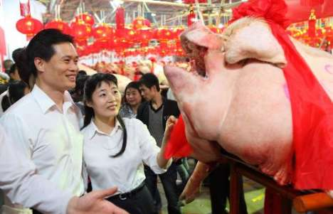 China's Guangdong Province Holds Pig Beauty Pageant