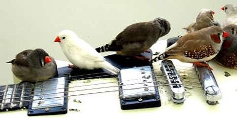 Feathery Guitar Feeders