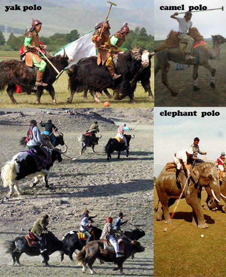 Nomadic Sports - Yak Polo Brings a Mongolian Flavour to the Traditional Polo Game