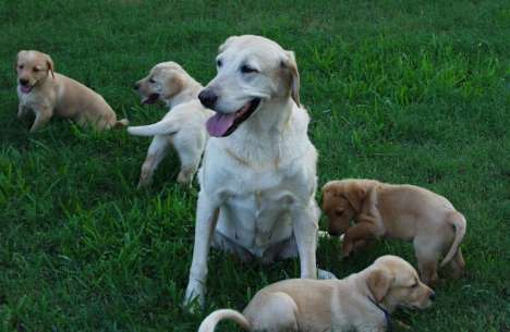 Nursing Home for Dogs