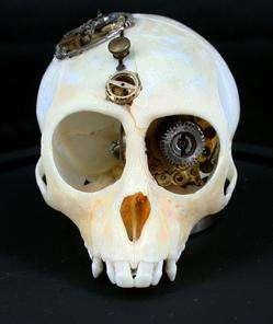 Steampunk Primate Craniums