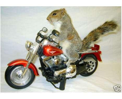 9 Squirrely Squirrel Finds