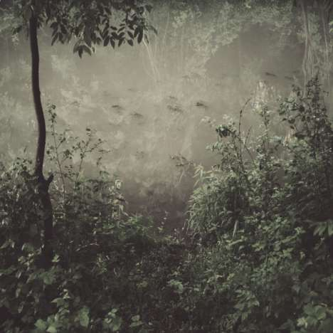 Waning Woodland Photography