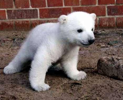 23 Polar Bear Innovations