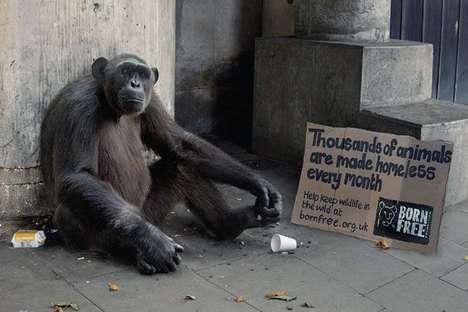 Homeless Wild Animals