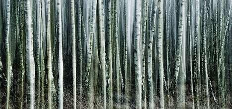 Blurry Birch Photography