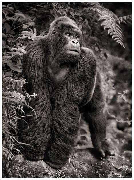 Serene Safari Photography