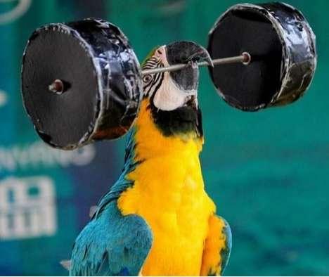 Avian Power-Lifters