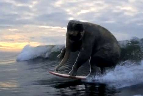 The Accenture 'Surfing Elephant' Commercial Features Active Creatures