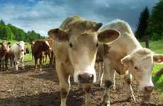 Energy from Manure - Biogas Technology Uses Cow Poop to Create Power