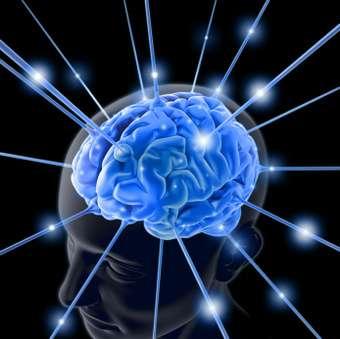 Brain-Boosting Bacteria