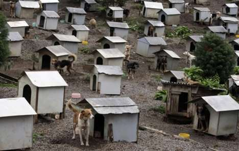 Abandoned Dog Communities