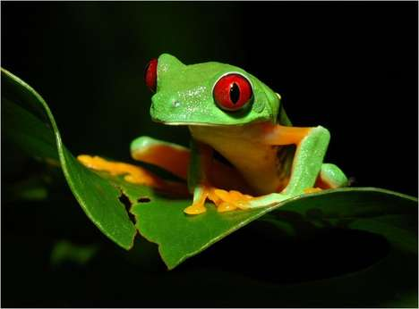 Plant-Texting Amphibians