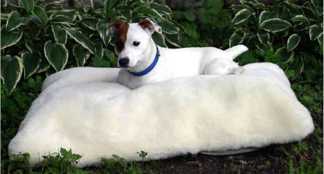 Orthopedic Foam Bed For Spoiled Pooches