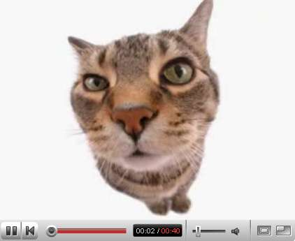 Morphing Kittens
