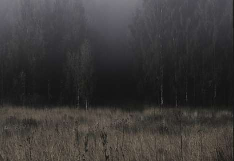 Forlorn Forest Photography