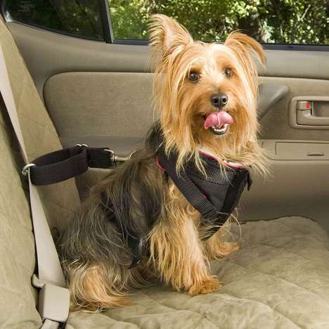 Cruisin' Canine Protection