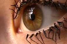 False Fly Eyelashes - The Flylashes are Dismembered Insect Body Parts