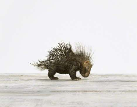 Miniature Critter Photography