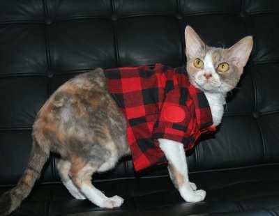Kitty Catwalks