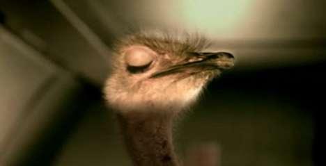 Flying Ostrich Ads