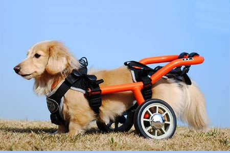 Doggie Wheelchairs - The Wilmog will Help Your Dog Move More Freely