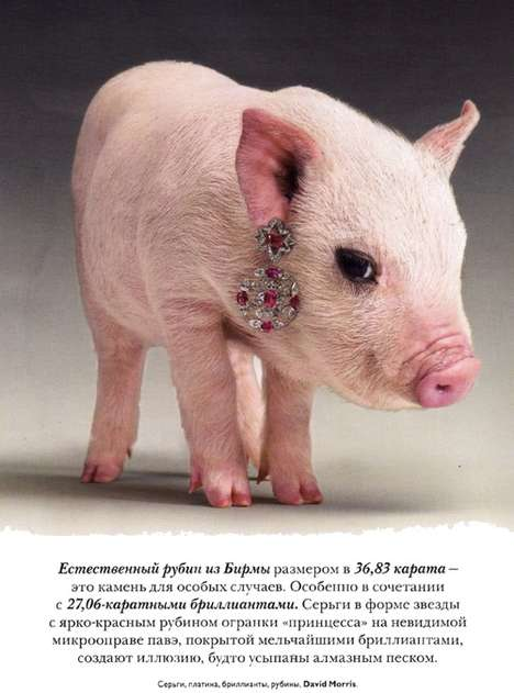 Piglets Fashion Models - The 'Jewellery' Vogue Russia Spread is Porky Perfection
