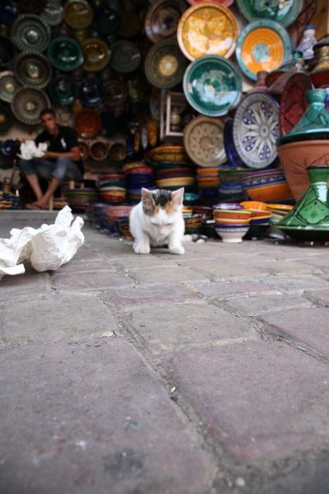 Lonely Cat Photography - 'Street Cats of Morocco 2010' by Clare-Frances Cassells Sees Sad Felines