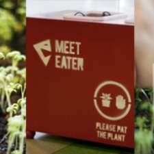 The Meet Eater Plant Survives on Social Interactions With Users