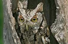 Avian Party Animal Blogs - The 'Hungover Owls' Site Features Birds Who Have Partied too Hardy