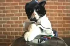 Viral Feline DJs - 'DJ Kitty' Aims to Give Keyboard Cat a Run for the Money