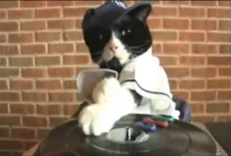 Viral Feline DJs