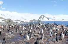 South Pole Street Views - Google Street View Antarctica Lets You See How Penguins Live