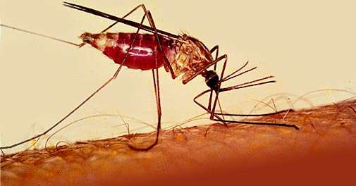 Malaria Cure Underway
