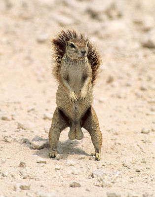 Birth Control For Squirrels