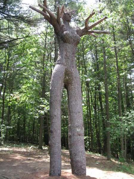Tree Limb Art