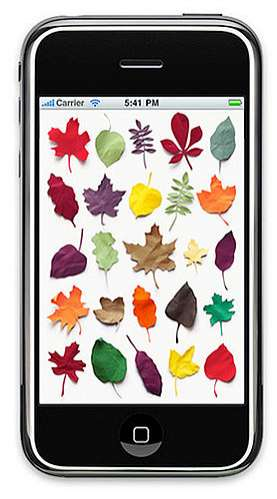 These Poolga iPhone Wallpapers are a Leafy Treat