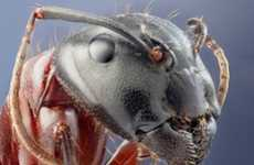 Macro Insectography - John Hallmen Gets Intimately Close with Nature's Creepy Critters
