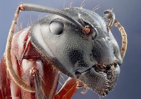Macro Insectography