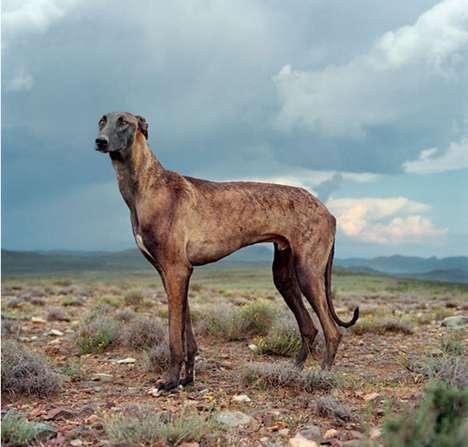 Majestic Animal Portraits