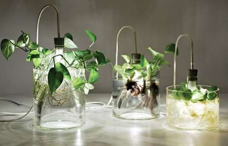 Glass Plant Lights