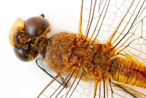 Dragonfly Close-Ups