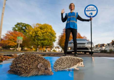 Spiky Road Crossings - Sega's Sonic the Hedgehog Helps Britain's Endangered Hedgehogs