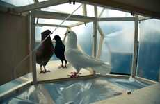 "Bird Poop Soap - The Pigeon d'Or Project Turns ""Rats with Wings"" into Clean Creatures"